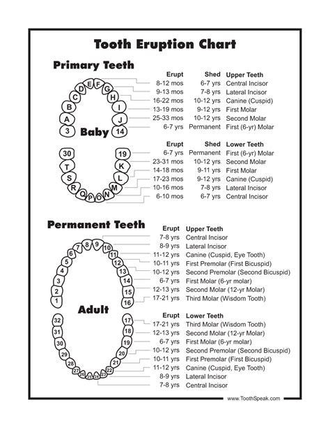 tooth diagram numbers baby tooth chart document sle my is 14 months and