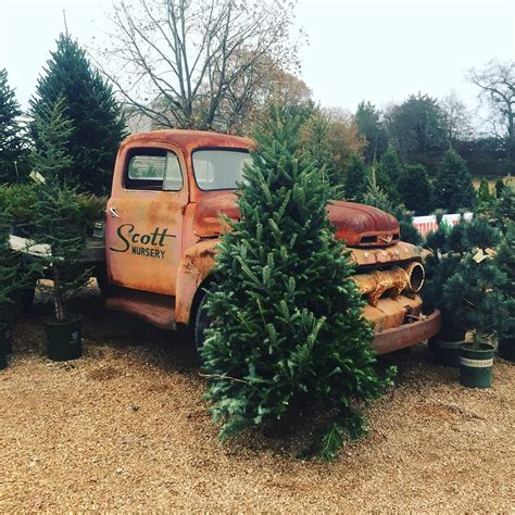 christmas tree farms in tennessee nashville interiors