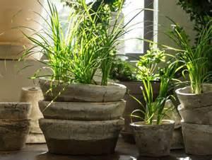 comment soigner des plantes d int 233 rieur bibamagazine fr