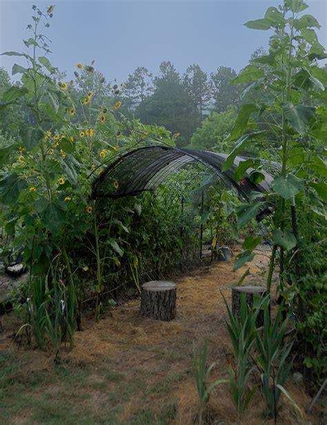 Cundall Vegetable Garden 29 Best Vertical Gardening Images On