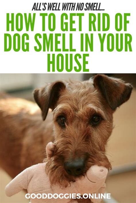 how to get rid of house odors ways to get rid of dog smell in house home design