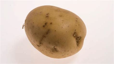 Potato Synonym by Solanum Tuberosum L Plants Of The World Kew