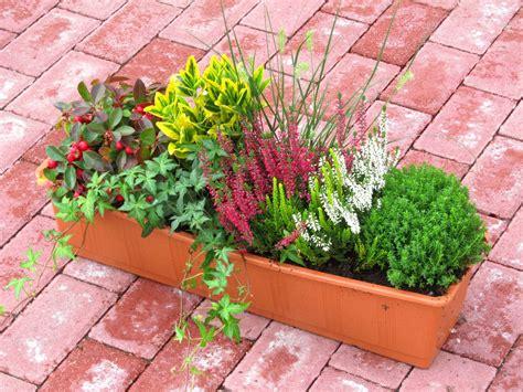 Balkonpflanzen Winterhart Immergr N 4092 by Balkonpflanzen Winterhart Pflegeleicht Pflegeleichte