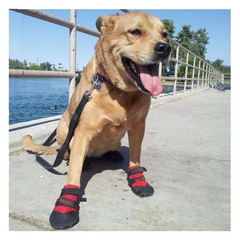 booties for dogs water shoes