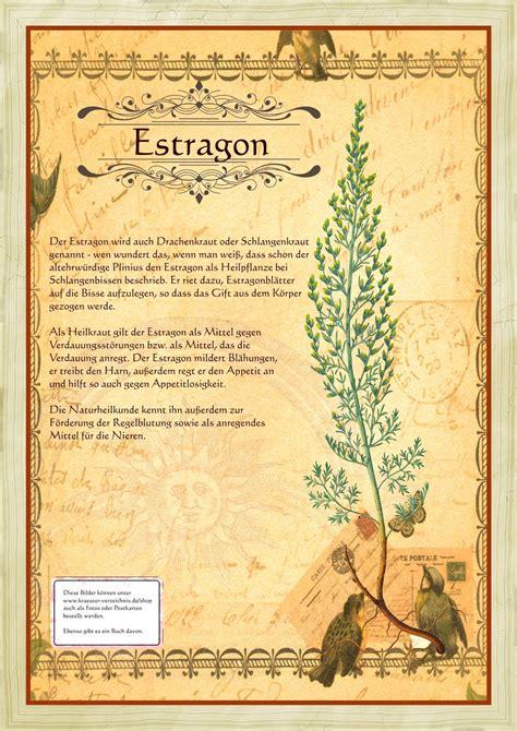 Gartenkräuter Pflanzen by Garten Kr 228 Uter Und Pflanzen Steckbriefe Estragon
