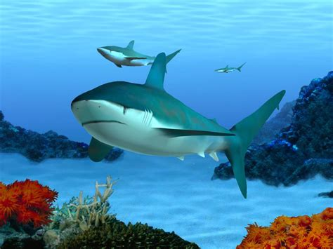 Home Design 3d Baixaki by Aquarium Screensaver Free 3d Marine Aquarium Screensaver