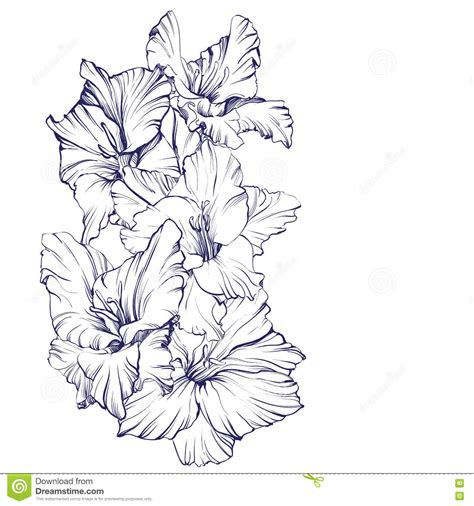 floral blooming gladiolus hand drawn vector illustration