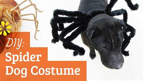 diy spider dog costume halloween kin collab sea lemon