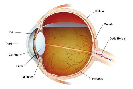2 C C T The Eye Of The eye health steven harris