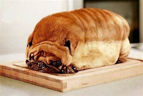 bread puppies can dogs eat bread and when yeast is dangerous animalso