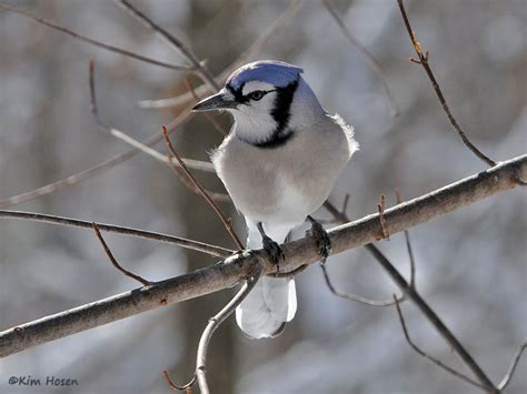 backyard birds of virginia backyard bird list northern virginia suburbs