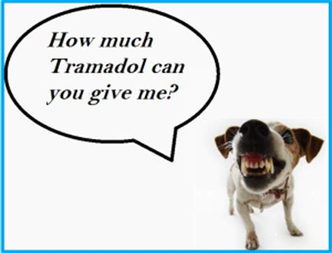 tramadol dosage for dogs tramadol for dogs any rescue