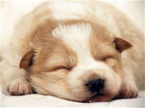 imagenes tiernas en full hd perritos tiernos para descargar gratis en hd los 20