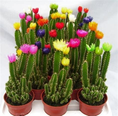 flowers glued on to cactus plants the home depot community