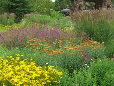 roy diblik perennial design yard and garden pinterest