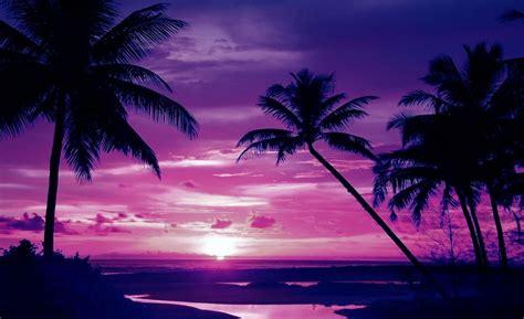 Hermosa Hawaiian Pink fototapeta fioletowy zach 243 d s蛯o蜆ca pla蠑a 889ve