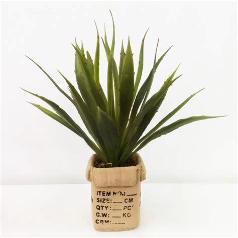 agave vaso agave siliconada vaso modelo cx papel 227 o floricultura s 243