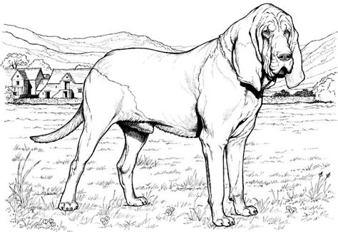 coloring pages of hound dogs dog breed coloring pages