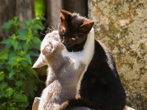 Wallpaper Of Cute Cat Couple | cute cats beautiful wallpapers images for desktop hd