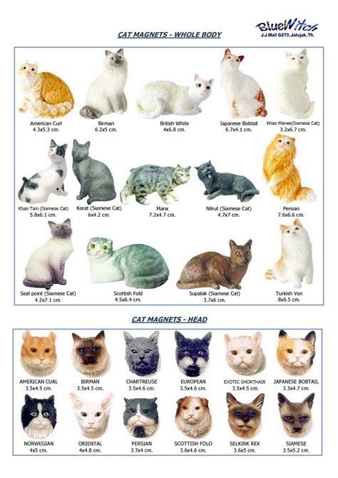 types of cats names of cat breeds cats types