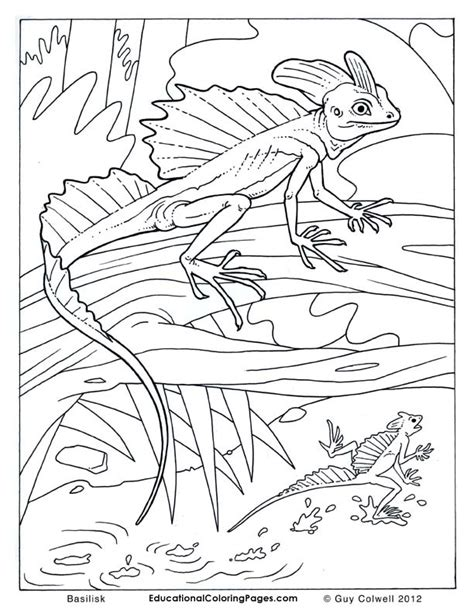 coloring page of a lizard lizard coloring pages lizard colouring pages color me