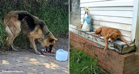 abandoned dogs tethered and abandoned dogs left to die in louisiana