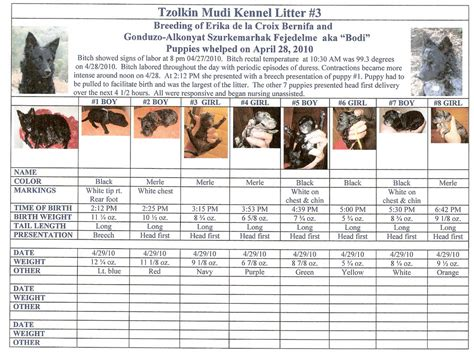 puppy size predictor chihuahua puppy growth chart breeds picture
