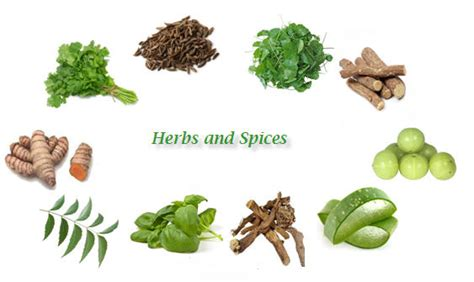 13 Medicinal Herbs And Spices by Herbs And Spices Plants Www Pixshark Images