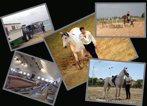 suche stall für pferd mein leben in fremden l 228 ndern mit den pferden