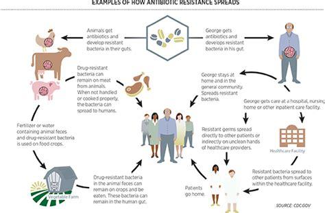 amoxicillin vs human amoxicillin human antibiotic images
