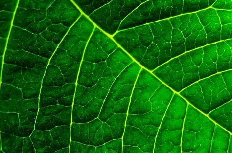 background daun free photo background organic macro green free image