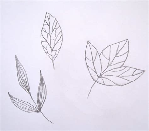 vector leaf tutorial how to turn a sketch into a vector in adobe illustrator
