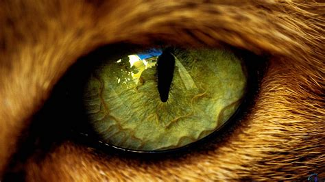 cat eye my 30 years of experience vet didn t what was in my