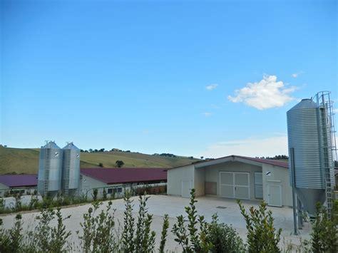 capannoni per polli capannoni avicoli per allevamento a terra
