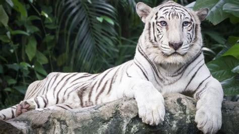 imagenes de animales albinos animales albinos ejemplares excepcionales de la