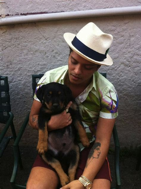 how much is a rottweiler worth bruno mars pets pet worth