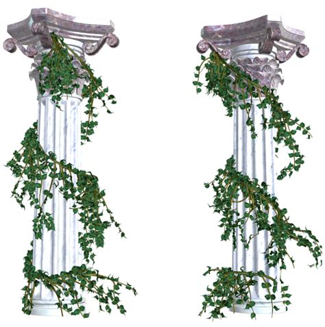 decorative plants png vines png decorative elements transparent