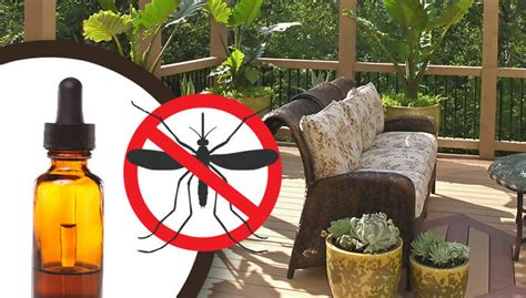 how to keep mosquitoes away from house 19 ways to keep mosquitoes away from your patio