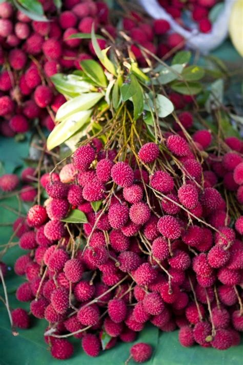 fruit similar to lychee 25 best ideas about exotic fruit on pinterest tropical