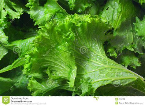 1x Ready Tunik Syakila Mustard fresh mustard greens stock photography image 2263792