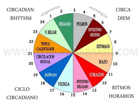 iluminacion circadiana ritmo circadiano bing images iluminaci 243 n pinterest