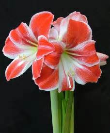Flower furthermore christmas silk flower arrangements holiday on