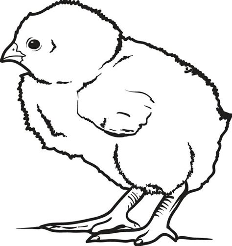coloring pages of baby chicks free printable little baby chick coloring page for kids