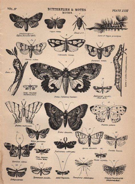 victorian design tattoo 25 best ideas about style tattoos on