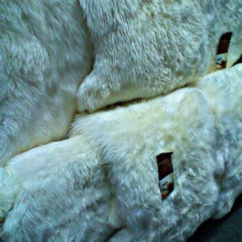sheepskin rugs auckland auckland sheepskin rugs santa barbara institute for consciousness studies