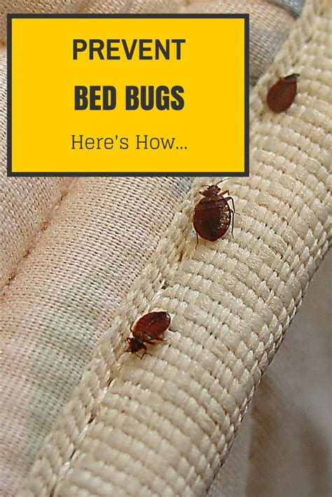 how to avoid bed bugs 11 best images about bed bugs treatment on pinterest