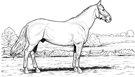 detailed horse coloring pages 22378 bestofcoloring com