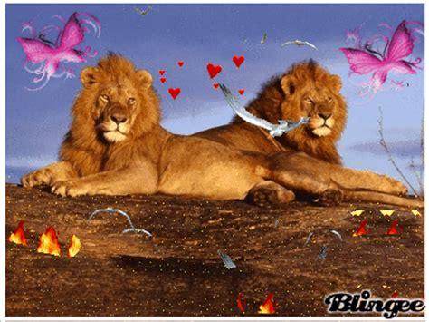 imagenes leones enamorados leones fotograf 237 a 110676148 blingee com