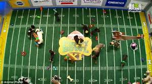 when does the puppy bowl start team ruff or team fluff puppy bowl xi kicks with the pups battling it out on