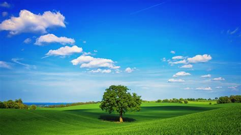 Download HD Green Landscape Lonely Tree Sky Blue Clouds